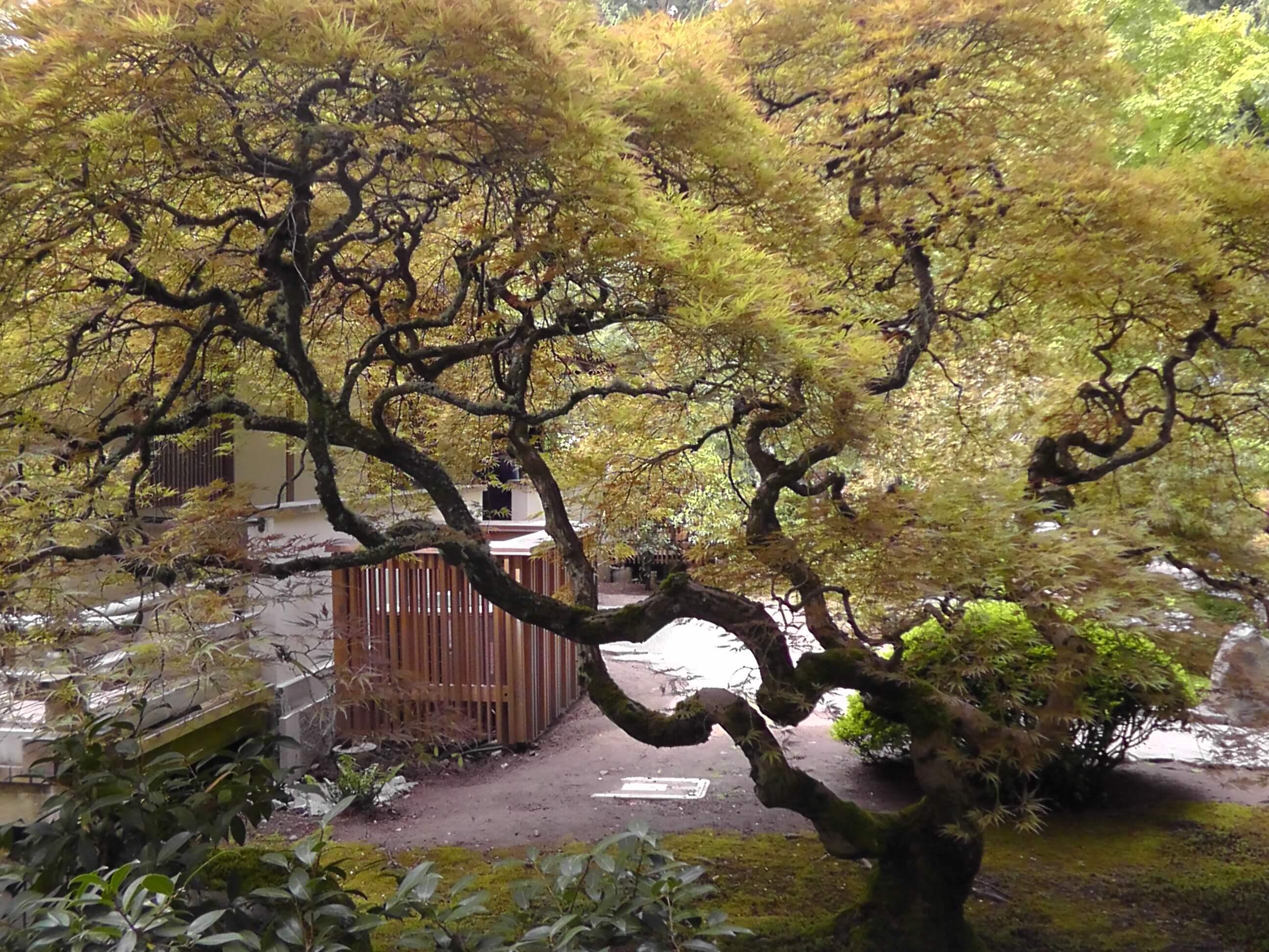 japan_gardens | Hoff\'s Aliner Travels